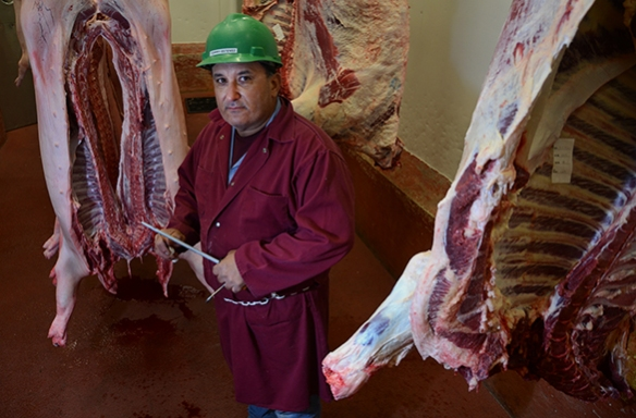 Tommy Estevez, the assistant retail manager at UF's meat processing center, poses with some cow and pig carcasses.
